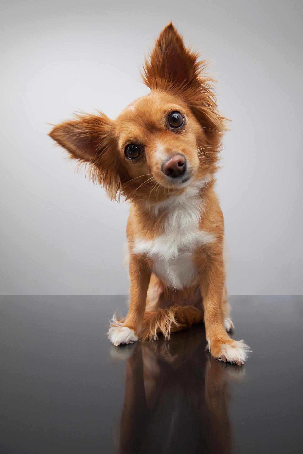 dog-1723894_1920